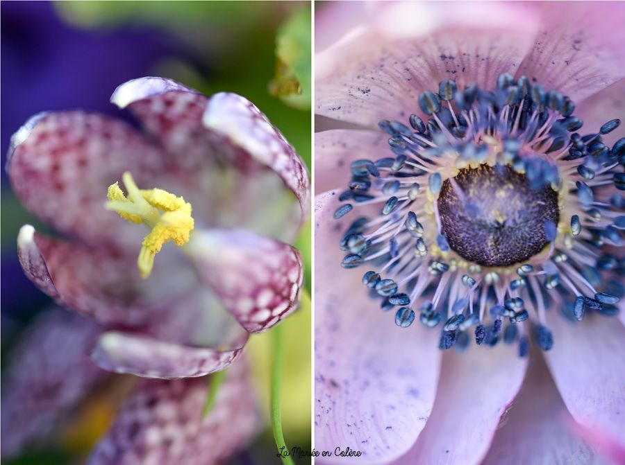 bouquet-de-mariée-violet-et-rose-macro